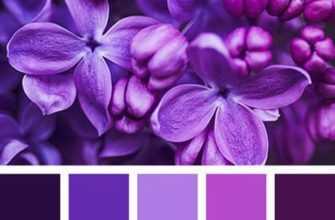 как получить фиолетовый цвет при смешивании красок гуашь