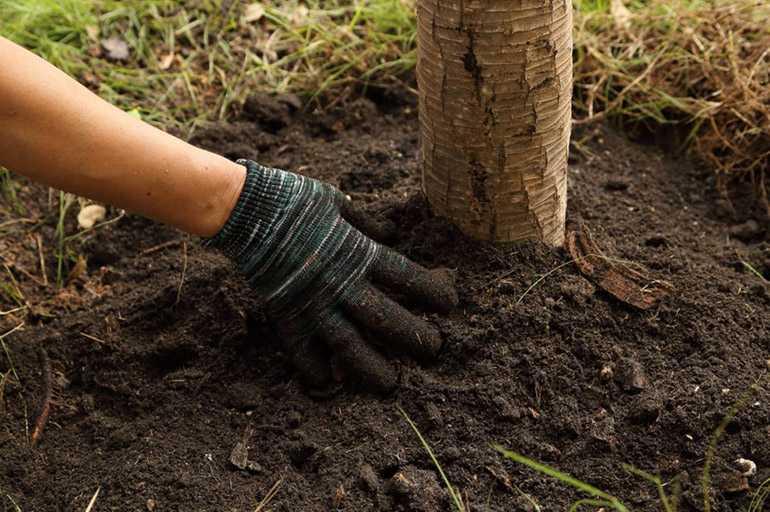 Для подкормки деревьев